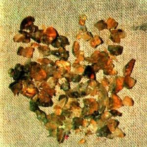 Астрагал густоветвистый (Astragalus piletocladus Freyn et Sint.)