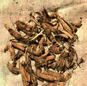 Девясил высокий (Inula helenium L.)