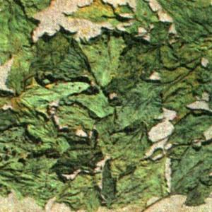 Дурман обыкновенный (Datura stramonium L.)