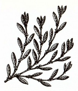 Горец птичий (Polygonum aviculare L.)