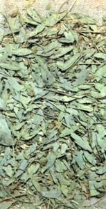 Кассия остролистная (Cassia acutifolia Delie)