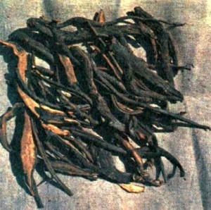 Кровохлебка лекарственная (Sanguisorba officinalis L.)