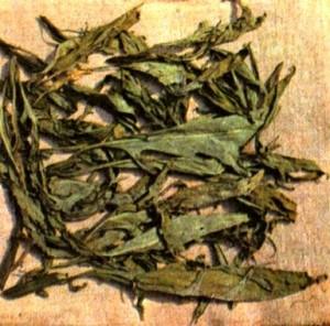 Паслен дольчатый (Solarium laclniatum Ait.)