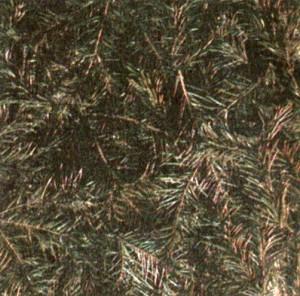 Пихта сибирская (Abies sibirica Ledeb.)