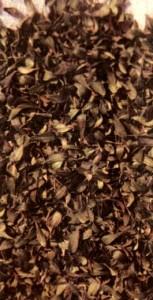 Толокнянка обыкновенная (Arctostaphylos uva ursi Spr.)