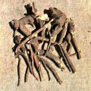 Элеутерококк колючий (Eleutherococcus senticosus Maxim.)